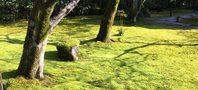 pelouse de mousse sous les arbres