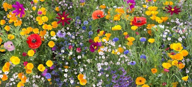 belles fleurs sauvages variées