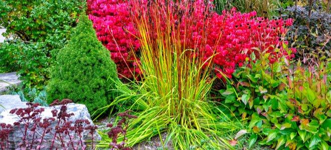 plantes colorées résistantes à la sécheresse