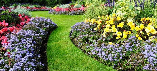 fleurs le long d'un chemin d'herbe